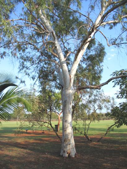 Bush trees and fruits